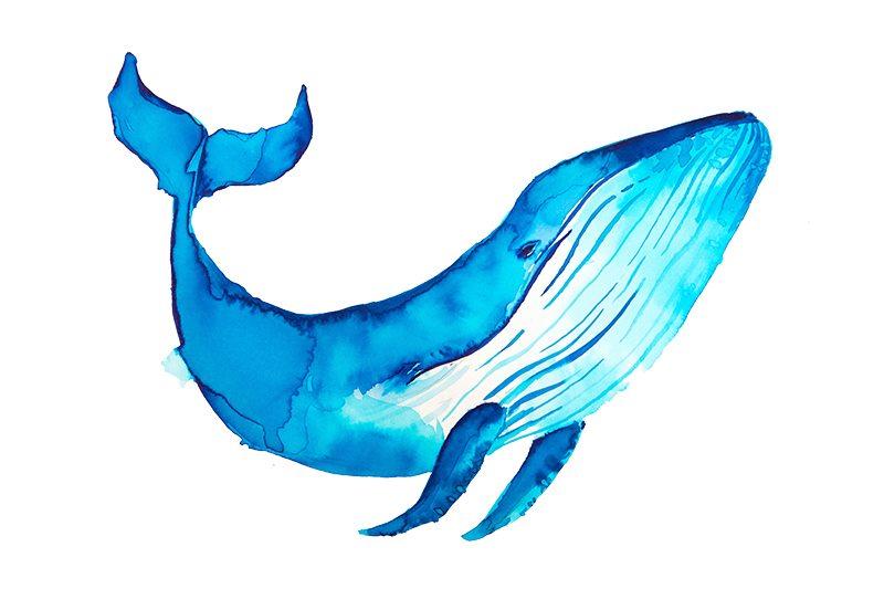 Sea Creatures Paint & Sculpt Kit